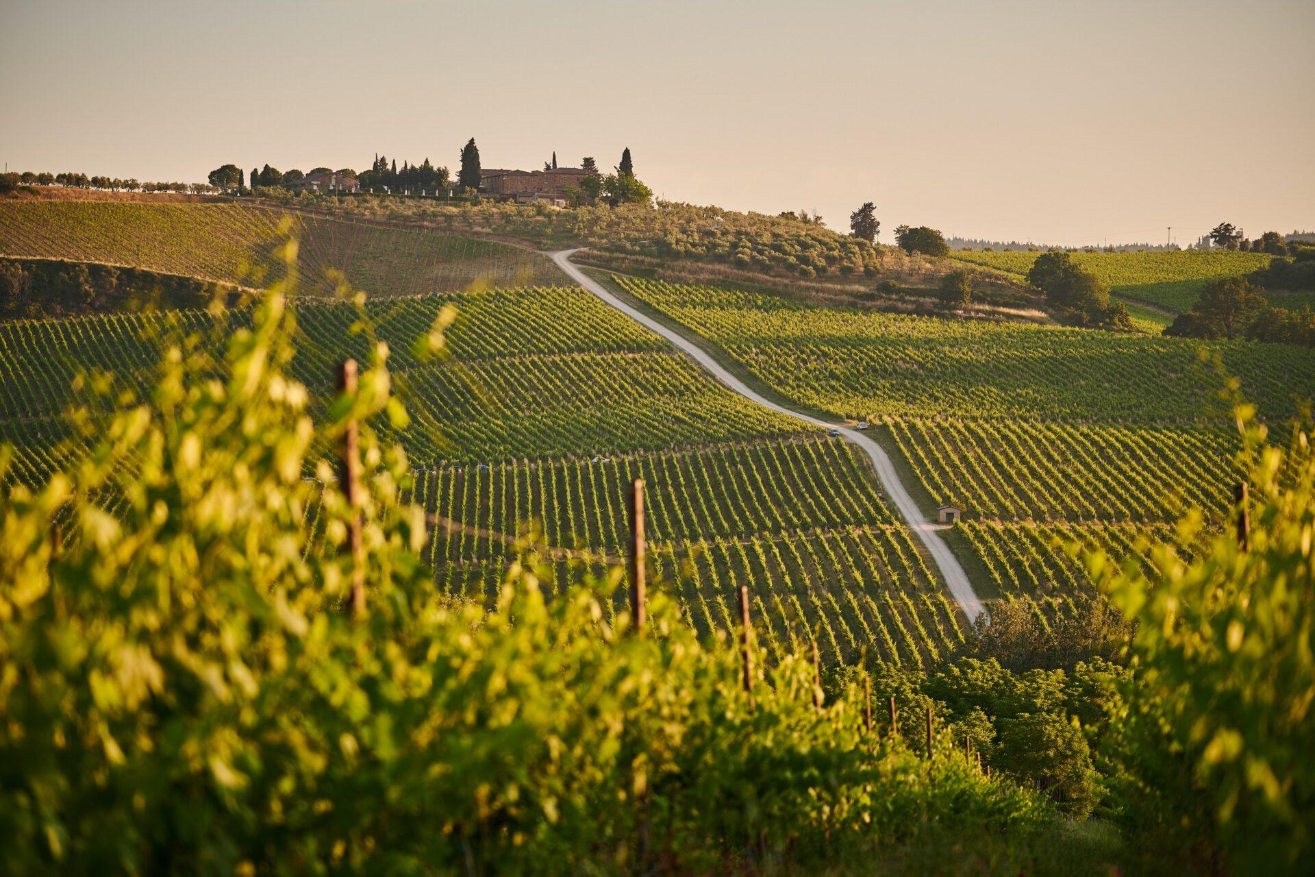 Volume di produzione di vino e mosto in Italia al 25 ottobre 2020, per regione